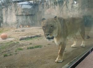 Zoo01_2