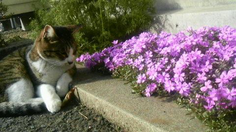 ハナコ、花大好きです。