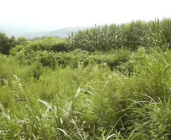 福島の里山