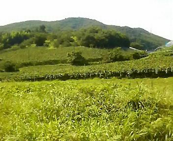 福島の里山ふたたび