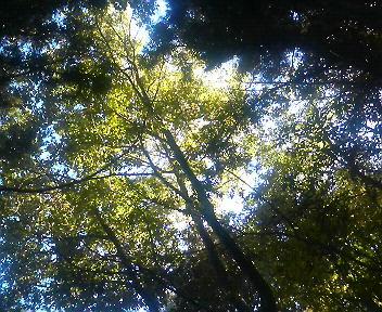 木洩れ日の林を歩いた