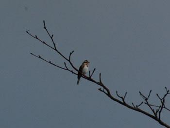 野鳥を見る季節