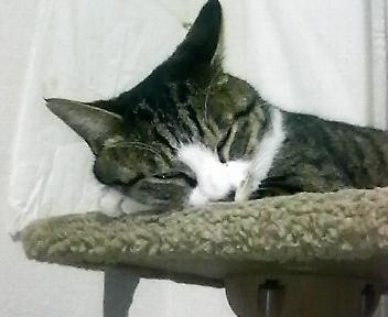 毎度お馴染み眠り猫です