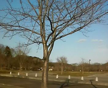 加瀬沼公園も春