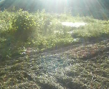 秋晴れの日差し