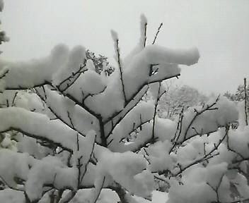 なごり雪だと良いのだが