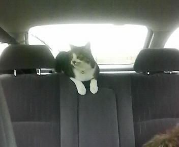 ハナコさんとドライブ