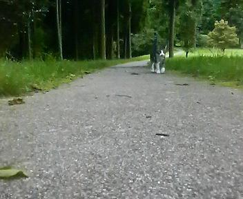 散歩は涼しい時に