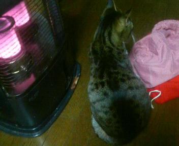 だって寒いんだもん
