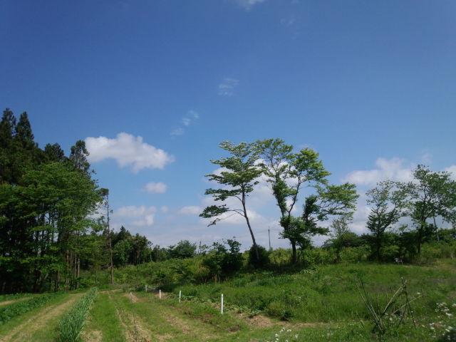 201306里山の風景